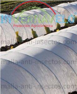Microtuneles y la malla anti-insectos