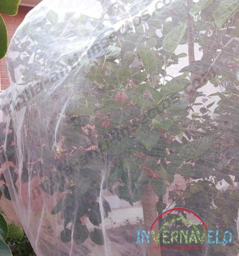 Protección de frutales de insectos